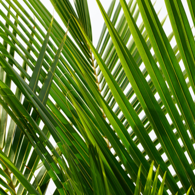 Zealots & Publicans Thoughts on Palm Sunday